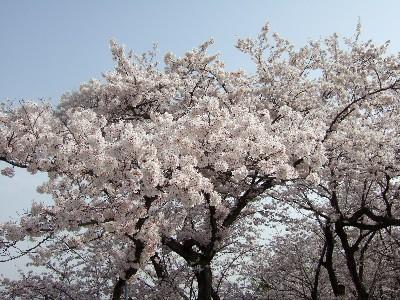 blog20070402g.jpg