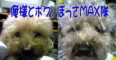 blog20070601f.jpg