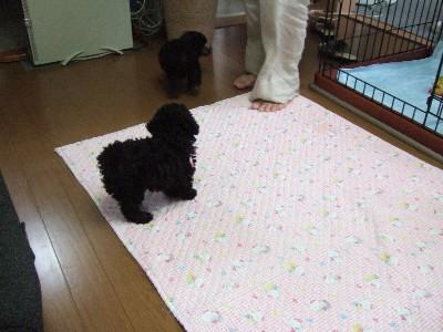 blog20070830l.jpg