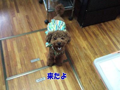 blog20070911a.jpg