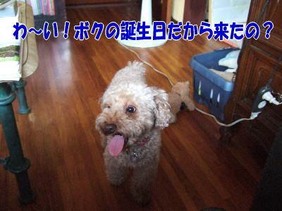 blog20070911c.jpg
