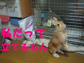 IMG_4049_sh01.jpg