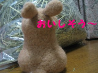 IMG_5963.jpg