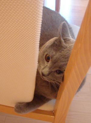 今度は椅子だ