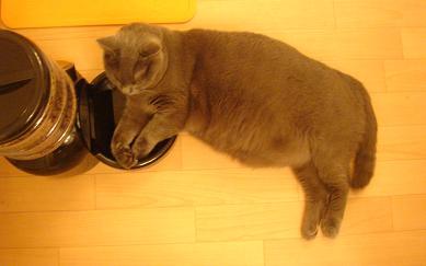 あきらめの悪い猫