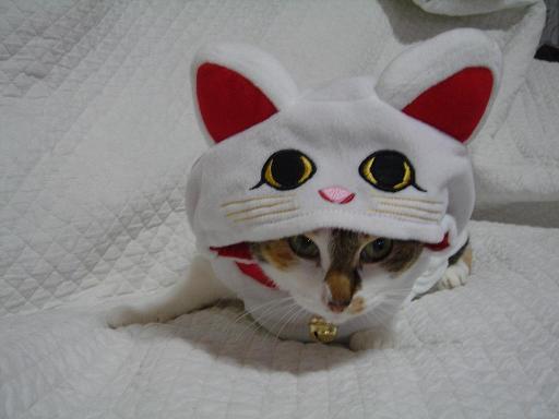 2007 なみ 招き猫