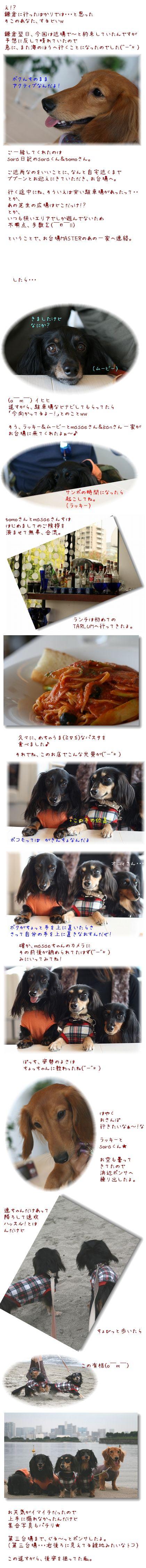 IMG_8020_20081009114327.jpg