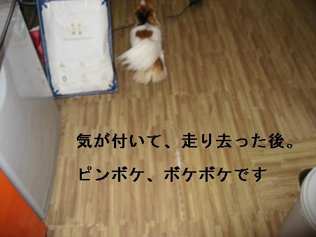IMG_1489.jpg