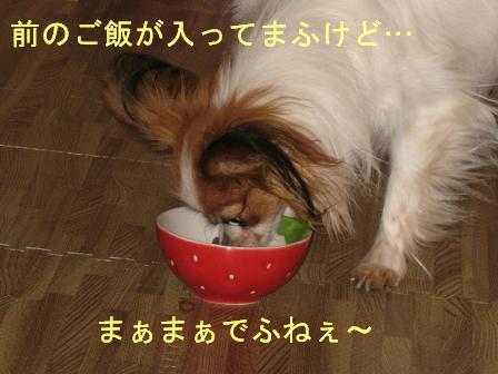 IMG_2217.jpg