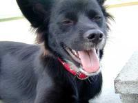 かたつむり犬2