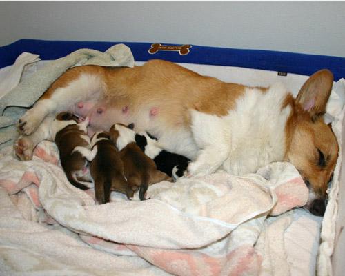 生まれてすぐの子犬たち