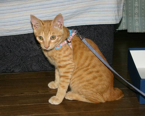 実家の猫=マズイ