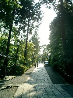 鎌倉 八幡宮 裏道