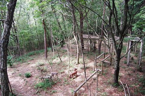 雑木林の草刈り
