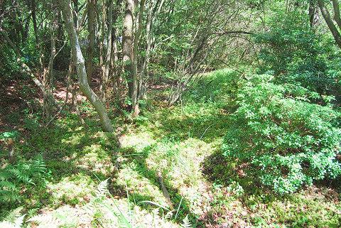 刈る前の湿地