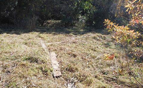 きれいに刈った湿地