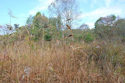 秋の湿地1