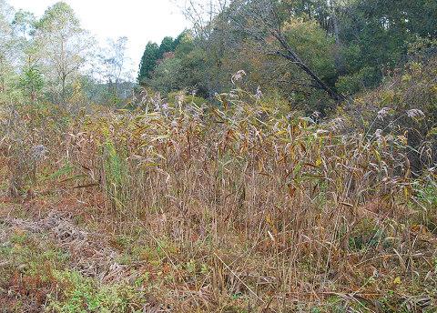 秋の湿地2