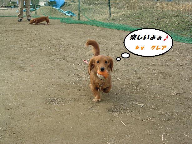 dogラン1