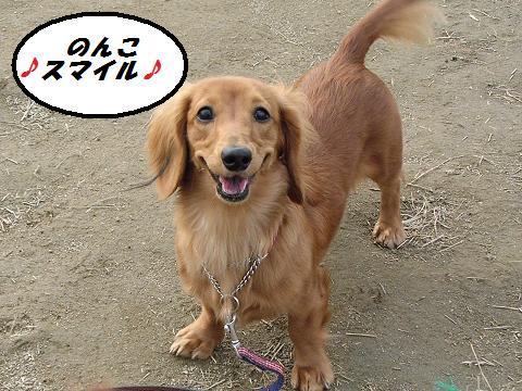dogラン (2)