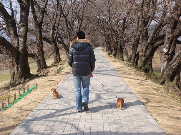 お散歩 1