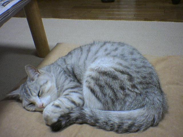 20051126●1寝てる時は天使小太郎.jpg
