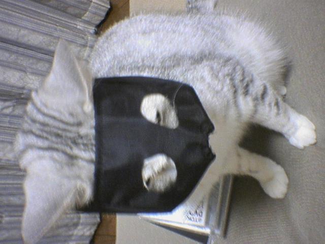 20051208●1小太郎可哀想だが.jpg