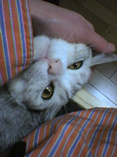 20051213●甘える20051213_2326~01.jpg