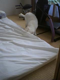 20060109●猫塚060109_0818~01.jpg