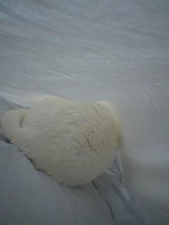 20060109●猫塚060109_0820~01.jpg