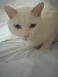 20060109●猫塚060109_0823~01.jpg