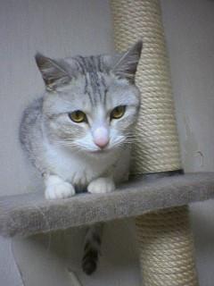 20060204●傍若無猫1 060108_0050~03.jpg
