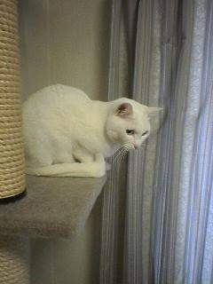 20060219●猫景色1 060218_1327~01.jpg
