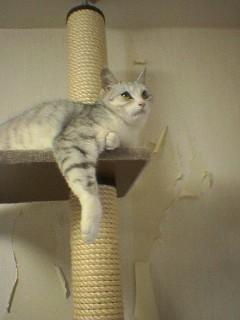 20060219●猫景色2 060218_1327~02.jpg