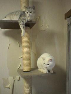 20060219●猫景色3 060218_1327~03.jpg