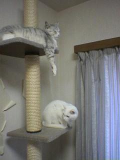 20060219●猫景色4 060218_1329~01.jpg