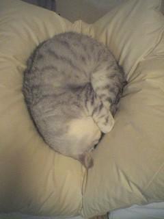 20060219●猫景色5 060218_1921~01.jpg