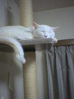 20060219●猫景色6 060218_2035~01.jpg