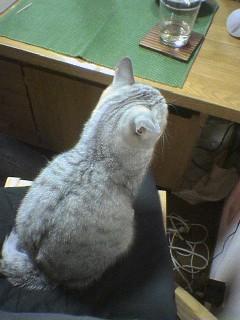 20060219●猫景色7 060218_2052~01.jpg