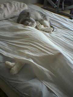 20060312●枕?1 060312_0905~01.jpg