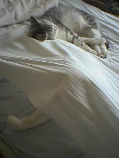 20060312●枕?2 060312_0906~01.jpg