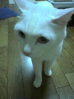 20060411●おいおい2 060411_2148~02.jpg