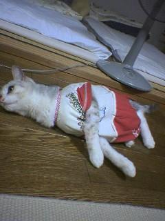 20060729●洋服6 060726_2057~02.jpg