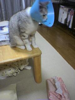 2006080808●猫姿3 060806_2121~01.jpg