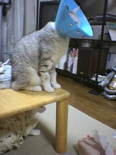 2006080808●猫姿4 060806_2121~02.jpg