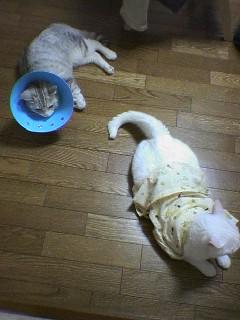 2006080808●猫姿5 060806_2138~01.jpg