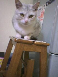 20061114●お詫び1 061026_2026~02.jpg