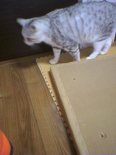 20070601●猫たわー2 070519_1746~02.jpg