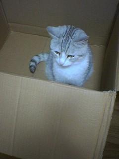 20070601●猫たわー3 070519_1751~01.jpg