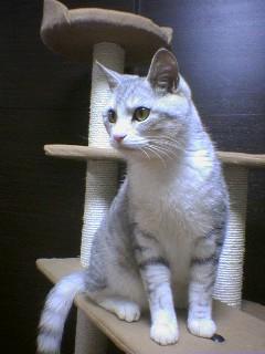 20070601●猫たわー7 070519_2101~01.jpg